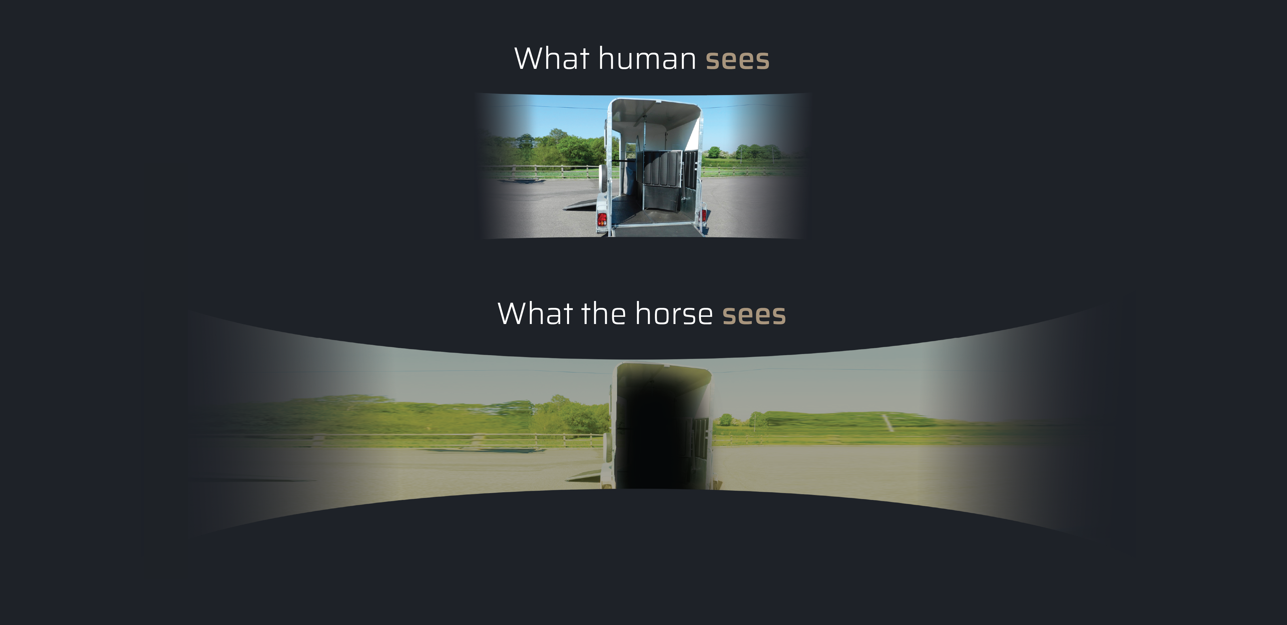 Proximal Horse Vision And Lighting