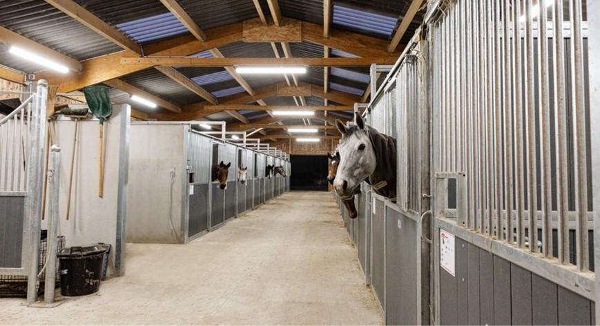 Reitstall LEBAS : Beleuchtung der Ställe und der Reithalle - PROXIMAL Equine LED lighting expert